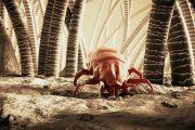 Почему появляются пылевые клещи и как с ними бороться