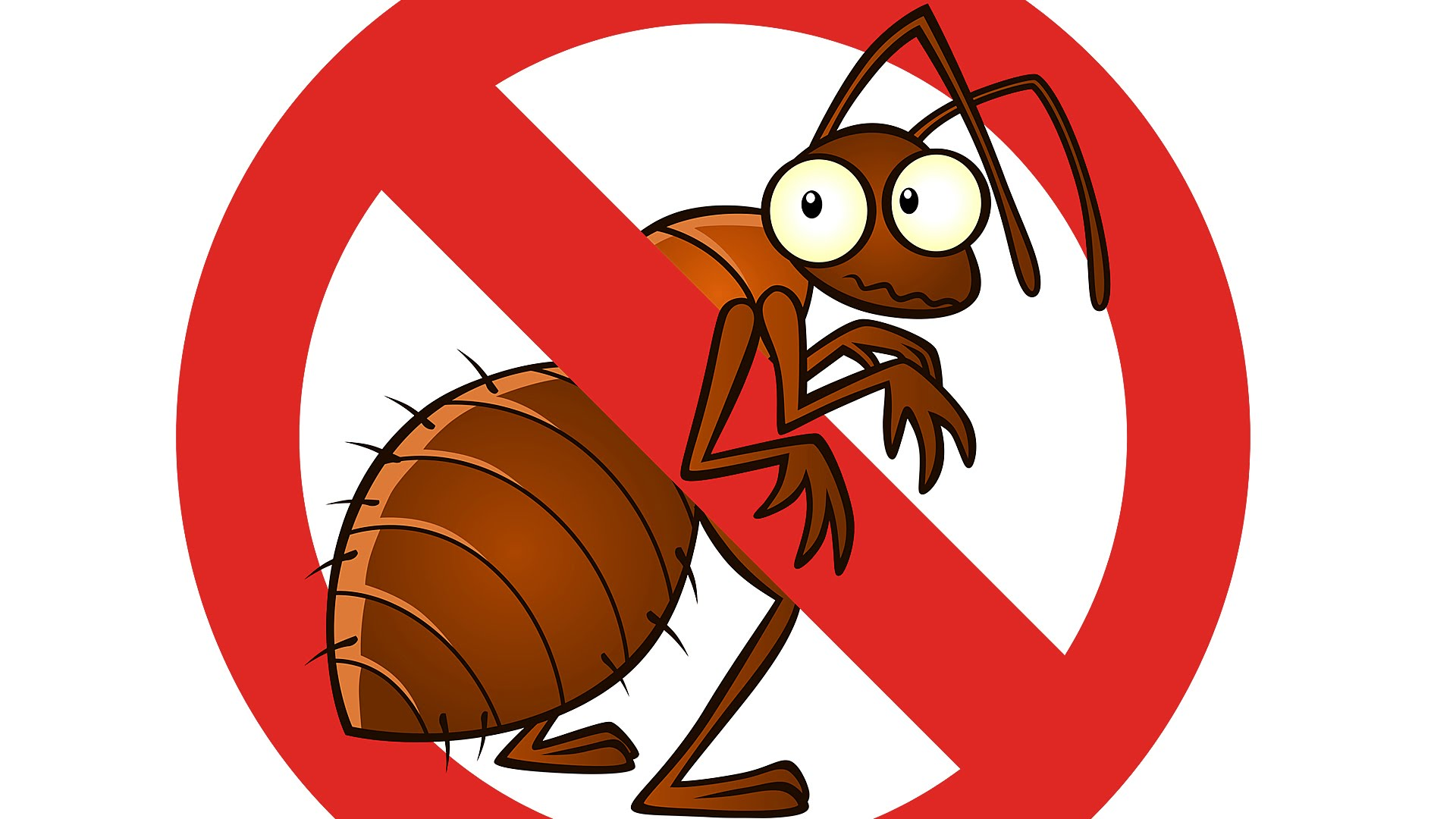 картинки борьбы с тараканами недавно диковинку